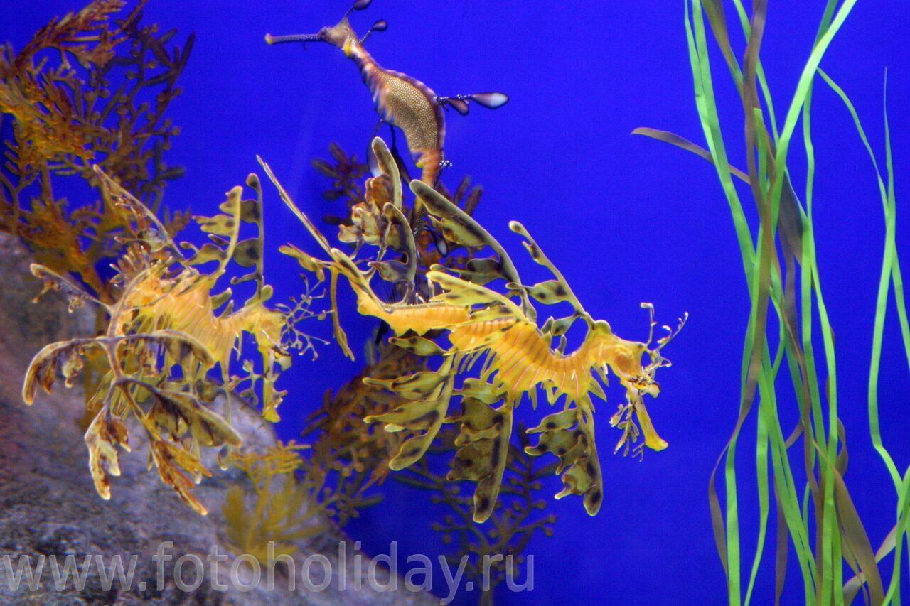 Морской конек океанариум сингапура